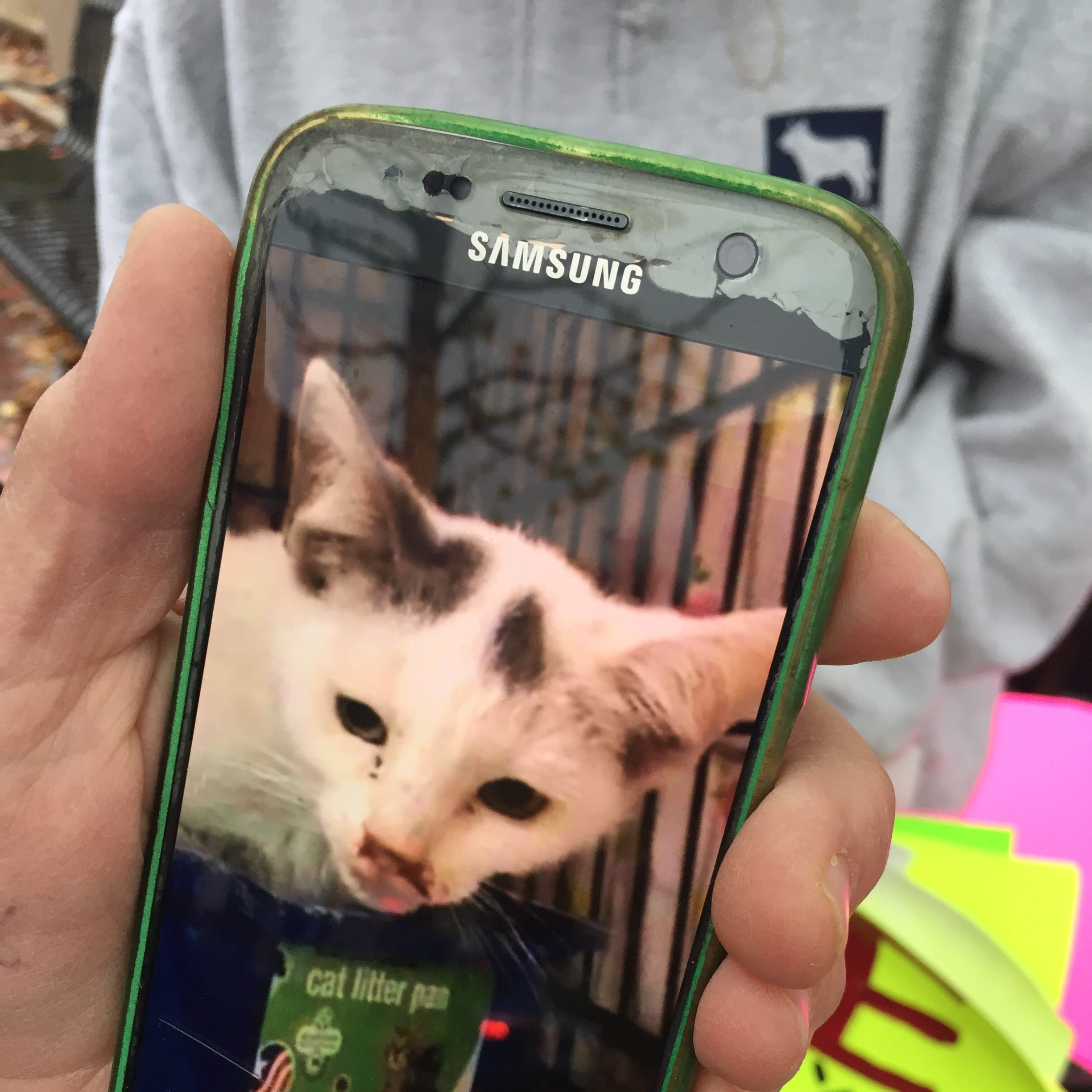 An animal rights advocate rallying in New City on Nov. 6 shows a photo on her phone of a cat at Hi Tor.