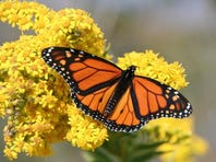 Climate Point: Endangered species roll-back, U.N. warns of food loss, wind energy grows