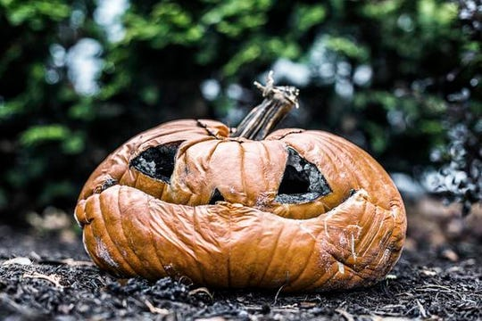 A moldy, rotting, flattened and disfigured jack o' lantern pumpkin has been left outside on the ground to be eventually swallowed back into the earth. Image taken four weeks after Halloween.
