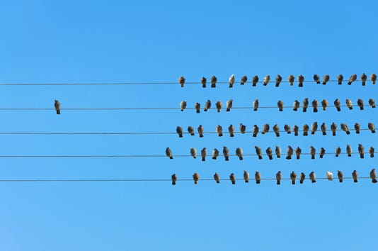 Individuality Concept Birds On A Wire