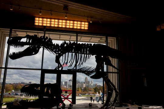 The Museum of Natural History & Science new Dinosaur Hall will display six dinosaur specimens, including a rare 60-foot-long Galeamopus. The gallery includes touchable dinosaur fossils, microscopes to examine these prehistoric giants on the smallest scale and an interactive globe that shows the movement of tectonic plates over millions of years.