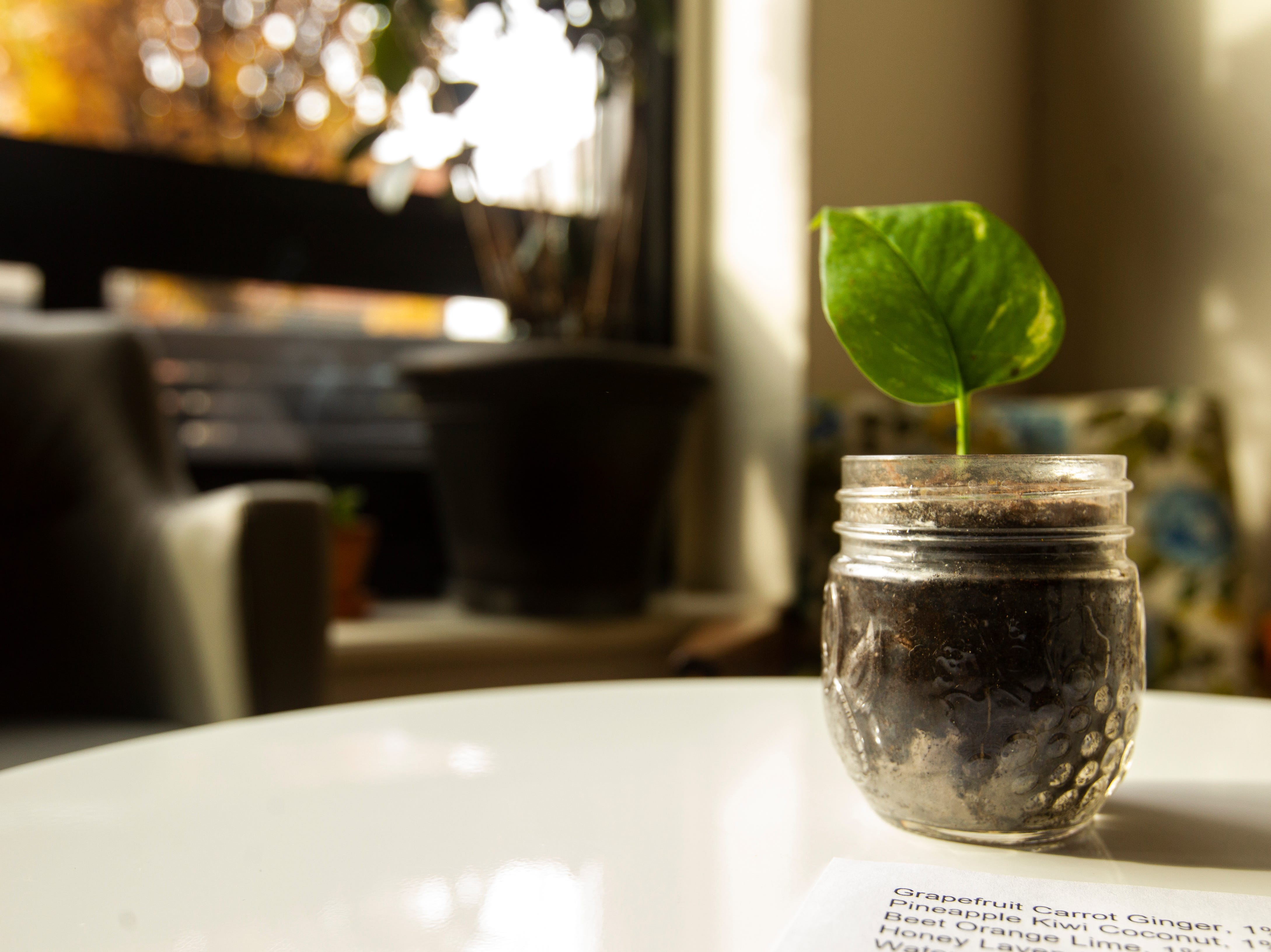 A plant sits on a table on Wednesday, Oct. 31, 2018, inside Wild Culture Kombucha in Iowa City.