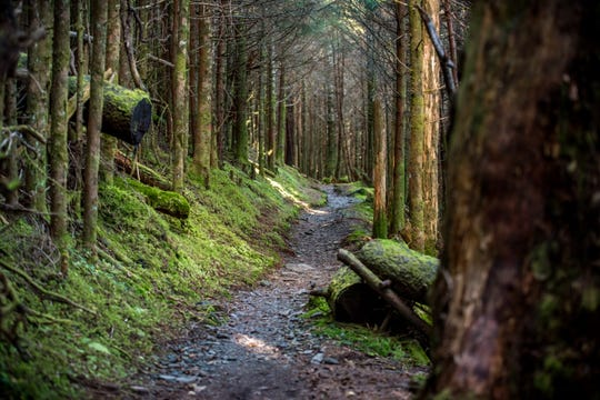 The Appalachian Trail, pictured here in the Smoky Mountains, cuts through 14 states and many national parks, including the Great Smoky Mountains.