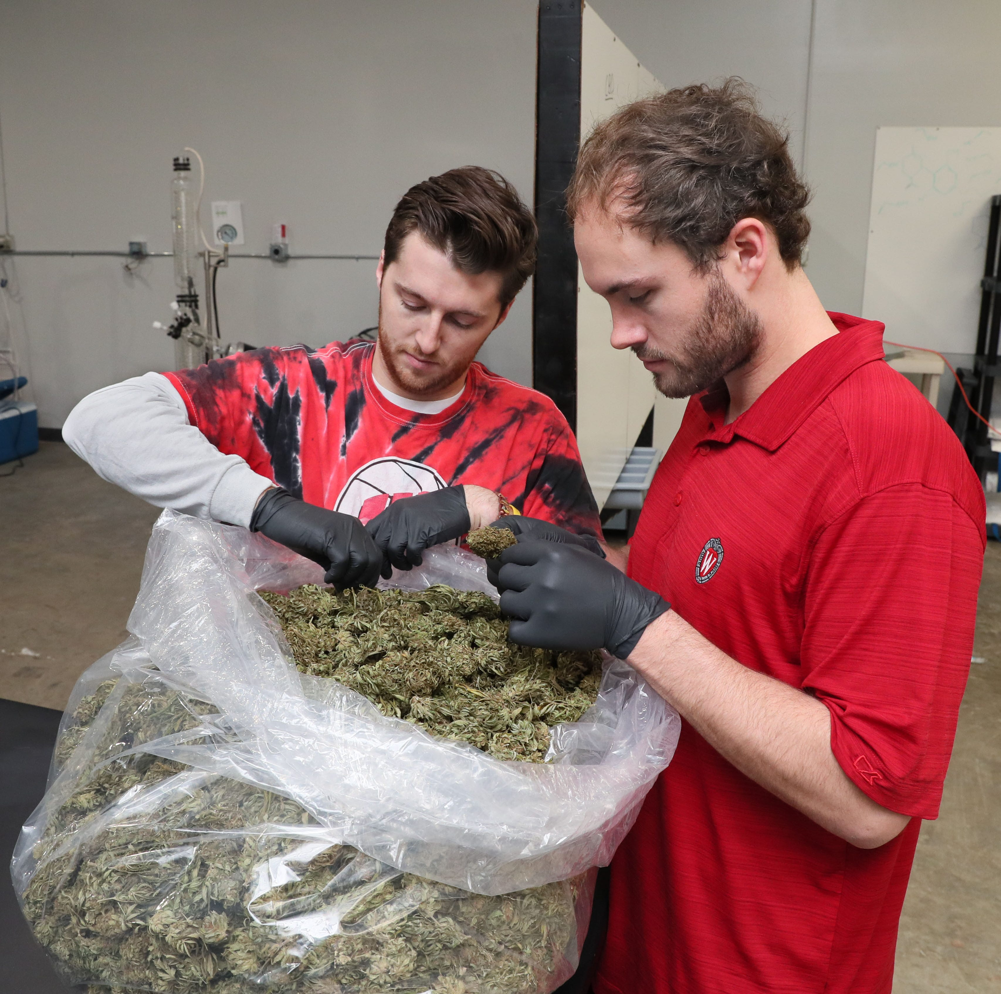 Dennis Mistrioty (left) and Griffin Lynch, of Wisconsin Hemp Scientific LLC, look over a bag of industrial hemp from a grower. It is the raw product from which they extract CBD and — note to stoners — you could smoke the entire bag and not get high.