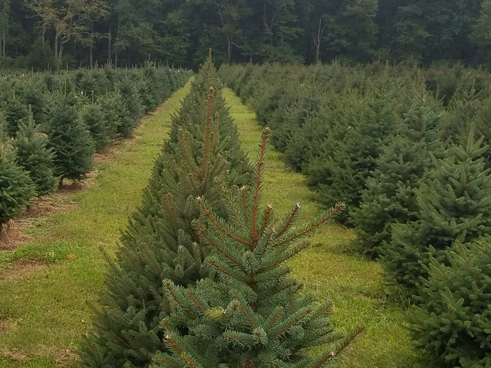Hidden Pond Christmas Tree Farm, 4 W. Field Road, Mendham. This cu-your-own tree farm grows Blue Spruce, Norway Spruce, Meyer Spruce and Canaan Fir here in New Jersey and brings in Fraser Fir from their other farm in Pennsylvania. They're well-known for their wreaths, greens and hayrides. They also host bonfires while drinking hot chocolate.