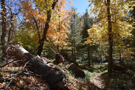 Col. Devin Trail