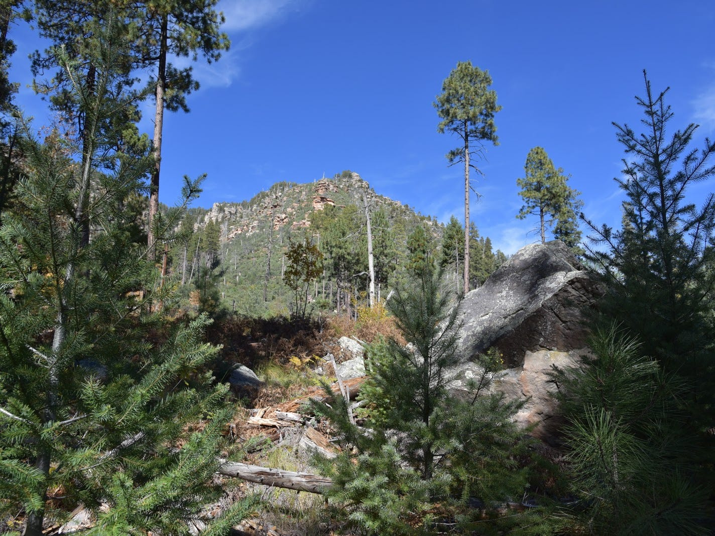The Col. Devin Trail climbs more than 1,000 feet to the top of the Mogollon Rim.