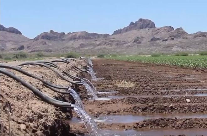 Water flows in 2017 to a Pinal County cotton farm at the base of the Sawtooth Mountains.
