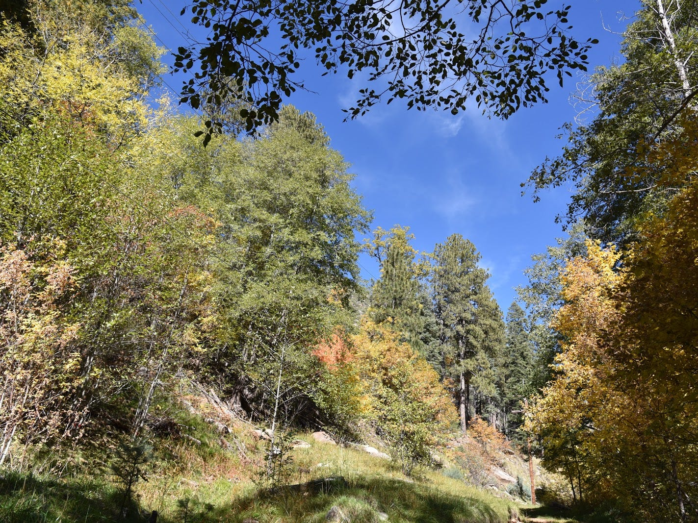 A typical scene on the lower part of the Col. Devin Trail near Payson.
