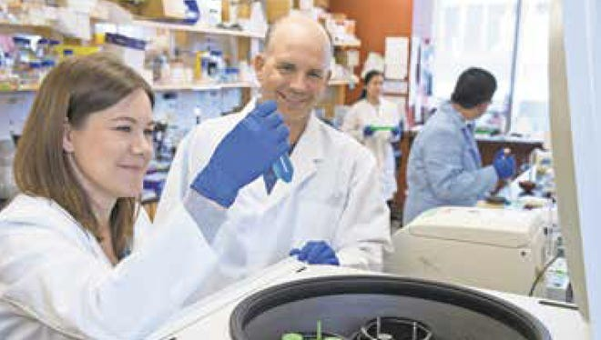 """Members of the Kuhns lab study the """"conversations"""" between T cells and the rest of the immune system."""