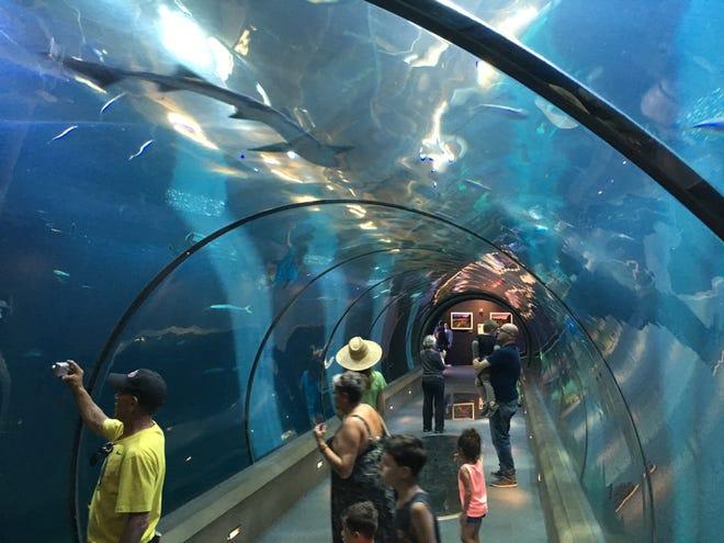 Oregon Coast Aquarium's Passage of the Deep.