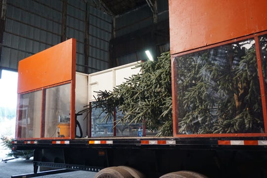 Clear plastic panels will allow spectators on the route to see the top 24 feet of the U.S. Capitol Christmas Tree. An additional 8 feet was added this year to expand the view.