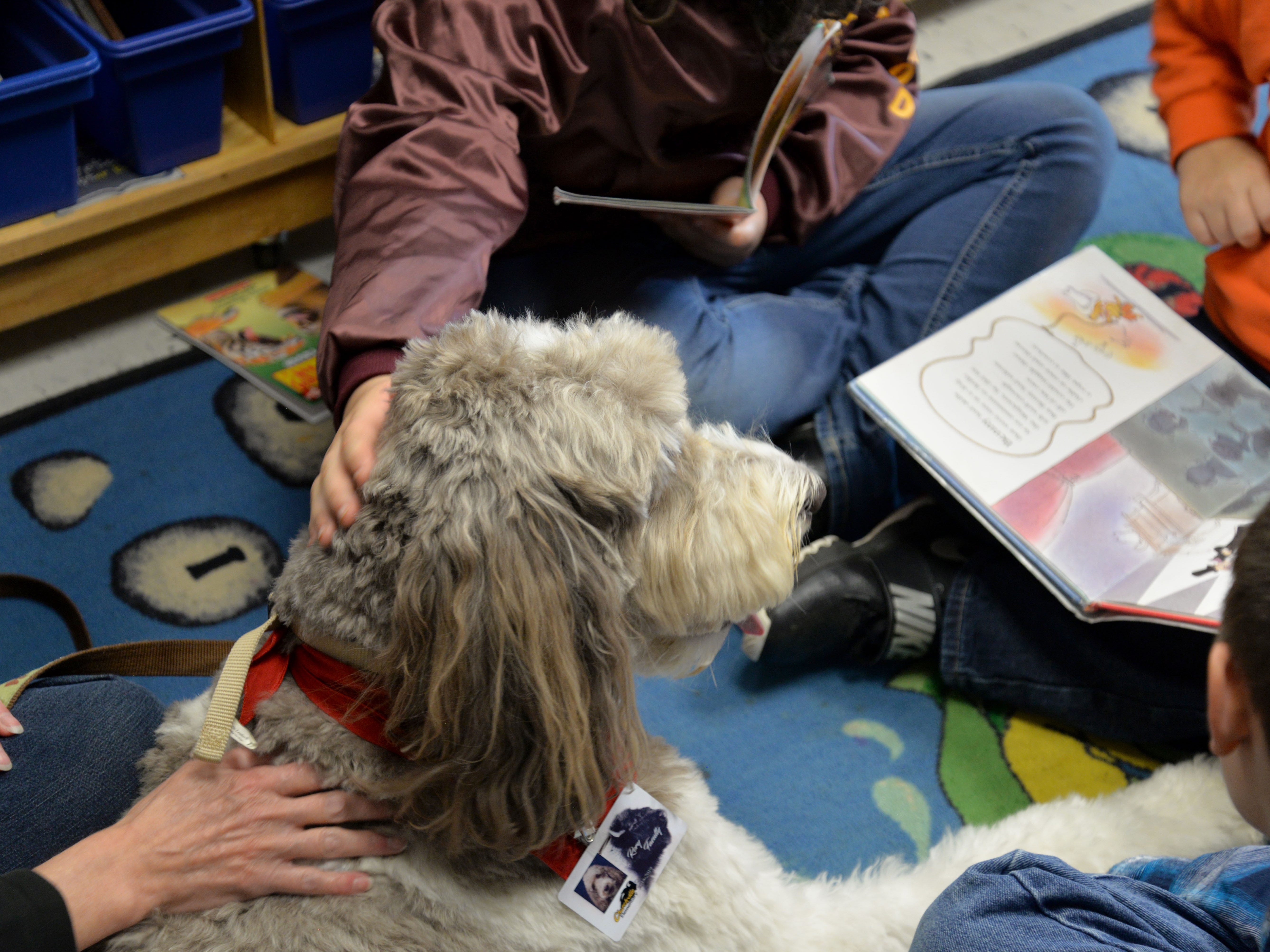Kathleen Wilson and her labradoodle, Rory, visit Churchville Elementary once a week so students can read to the dog. Rory is a certified therapy dog and is allowed in any Augusta County School or school function.