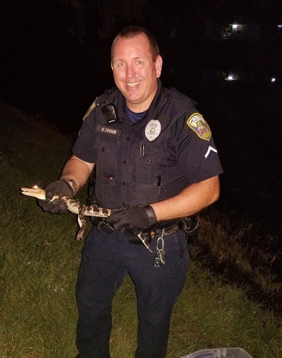 Officer Michael Connor with Walmart alligator
