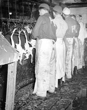German prisoners of war worked in Delaware poultry processing plants during World War II.