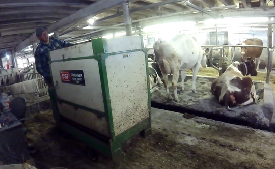 A motorized feed cart with a standing platform allows Adam Faust to feed the cows in a timely fashion with reduced the strain on his body, which he would have if he continued pushing a cart through the barn.