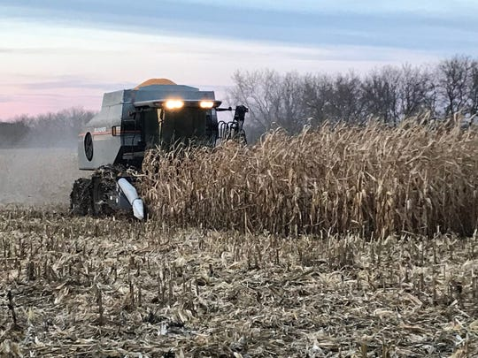 Each fall its a race against time as farmers try to get the crop off at its peak quality.
