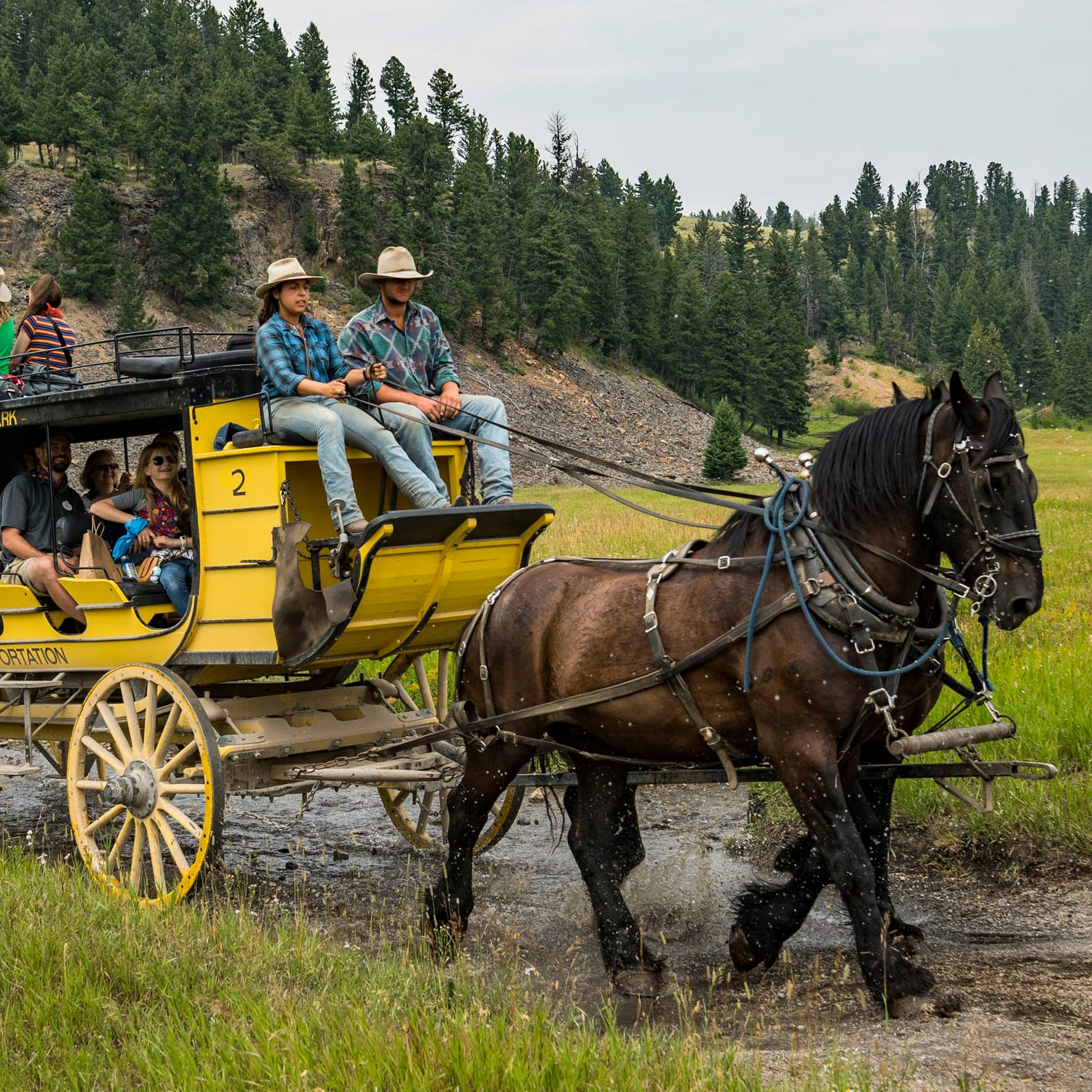 Horse-drawn, replica stagecoaches help give a sense of the way visitors first traveled through Yellowstone in the late 1800s and early 1900s.