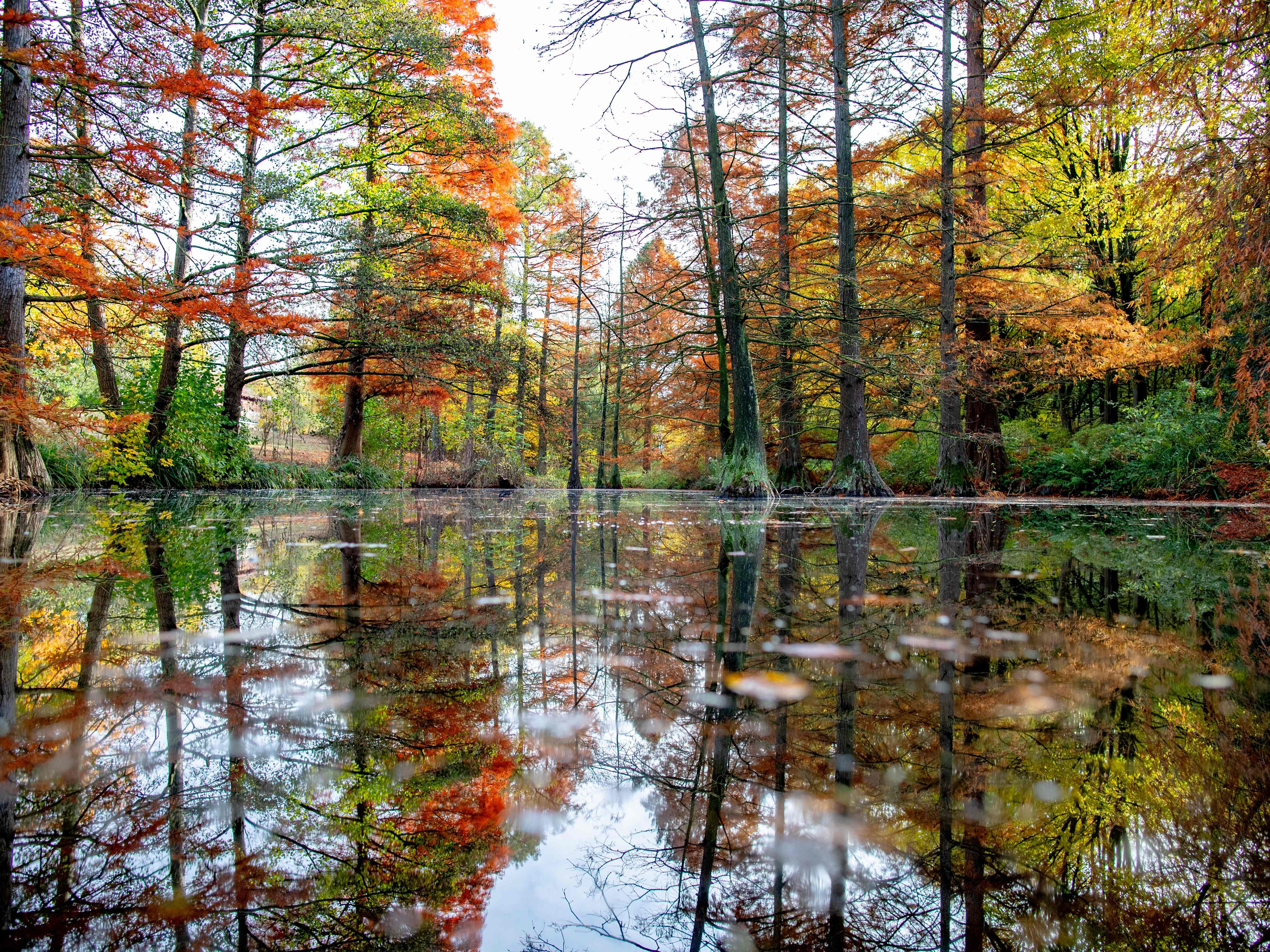 Autumnally colored trees reflect in the water of a pond in Dortmund, Germany, Nov. 6, 2018.
