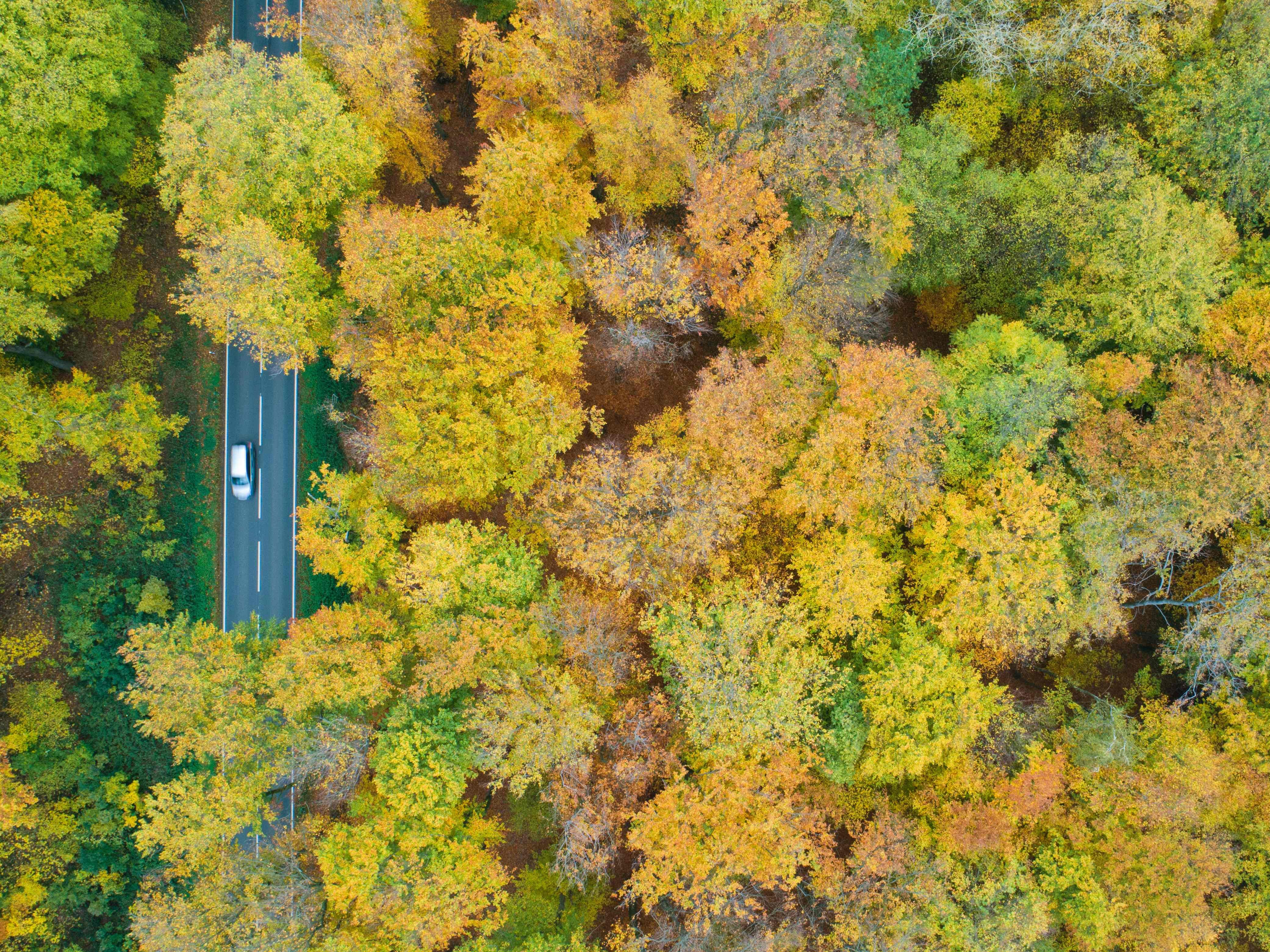 A car can be seen through an autumnally colored deciduous forest in Sehnde, Germany, Nov. 5, 2018.