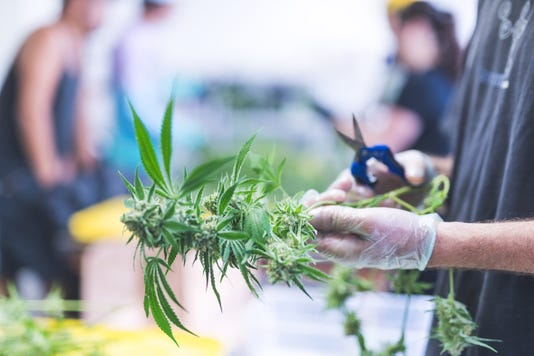 Why one cannabis company ensures its products are 100% vegan, 100% organic