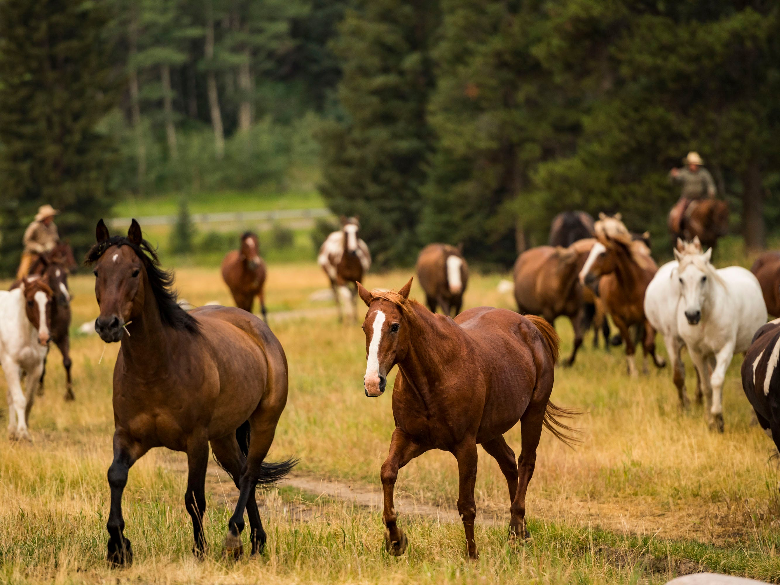Plenty of horses roam the 320 Guest Ranch in Gallatin Gateway.