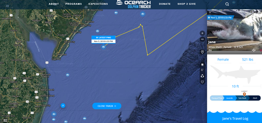 Screen grab from OCEARCH's shark tracker showing the position of Jane, a tagged great white shark.