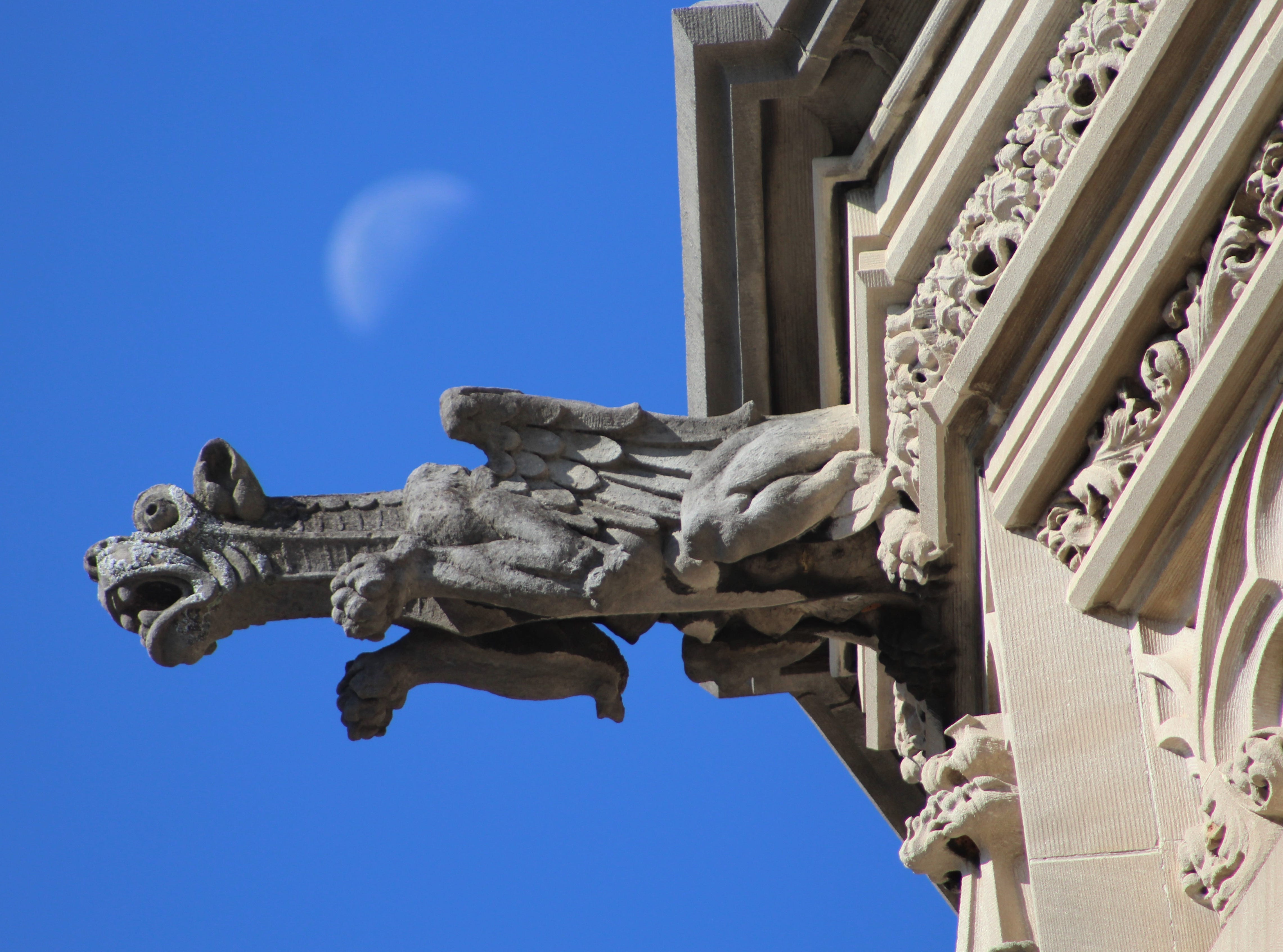 A gargoyle protrudes from Biltmore House, set against a blue fall sky with a bit of moon still visible. The photo was taken, appropriately enough, on Halloween.