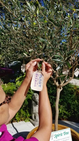 R.S. Walsh Landscaping and In The Garden has planted an olive or spirit tree. Customers or browsers can buy a tree tag for $5 where they can write well-wishes or blessings on the tag and attach it to the tree. In The Garden will match all tag sales and donate to various Sanibel programs.