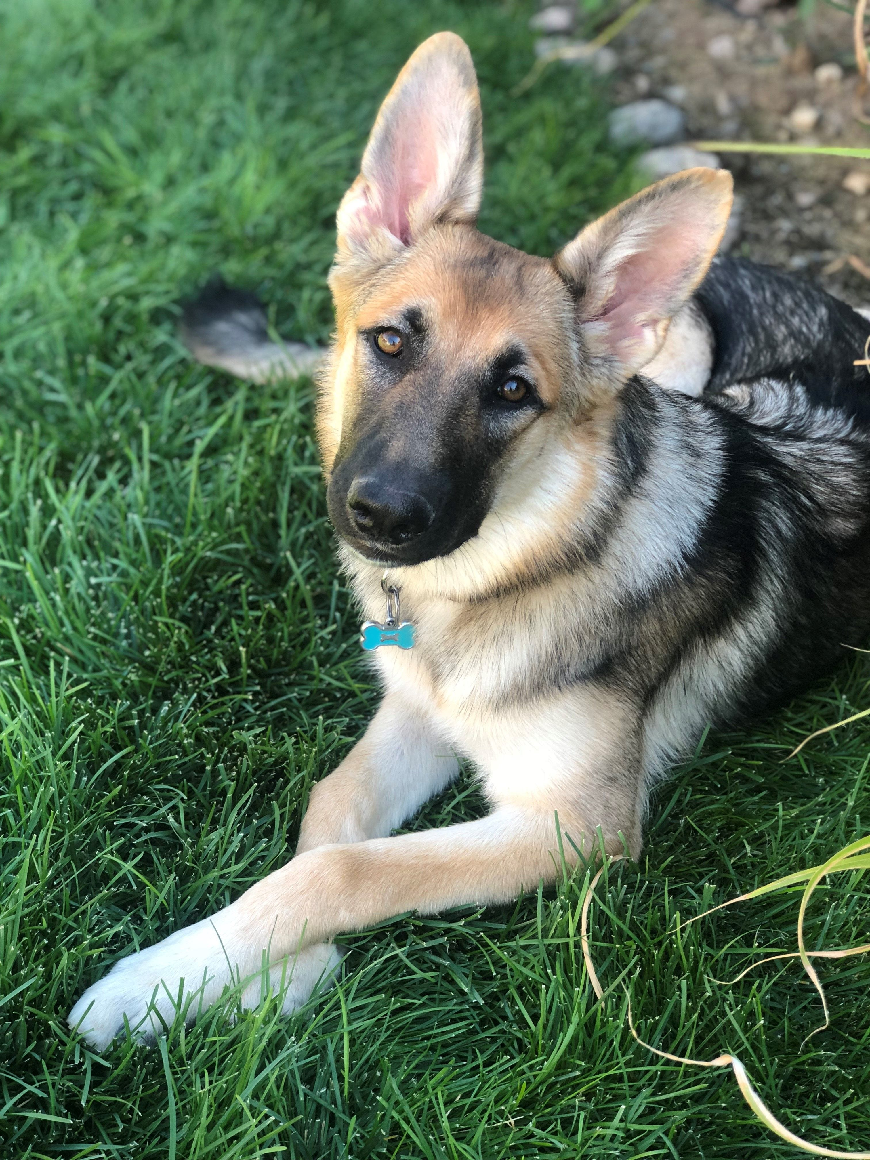 Mad Max? Dog's seizure sparks lawsuits, confinement at Southern