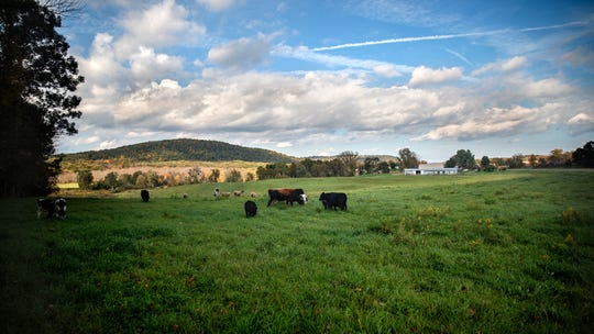 Walter Palmer has 10 Lowline Angus beef cattle and sheep. His farm is in Savona in Steuben County.