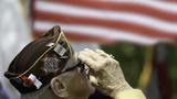 Veterans Day is always observed on November 11