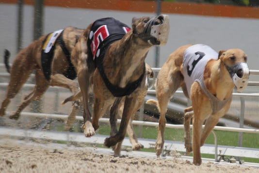 Florida's ban on greyhound racing will leave thousands of homeless dogs