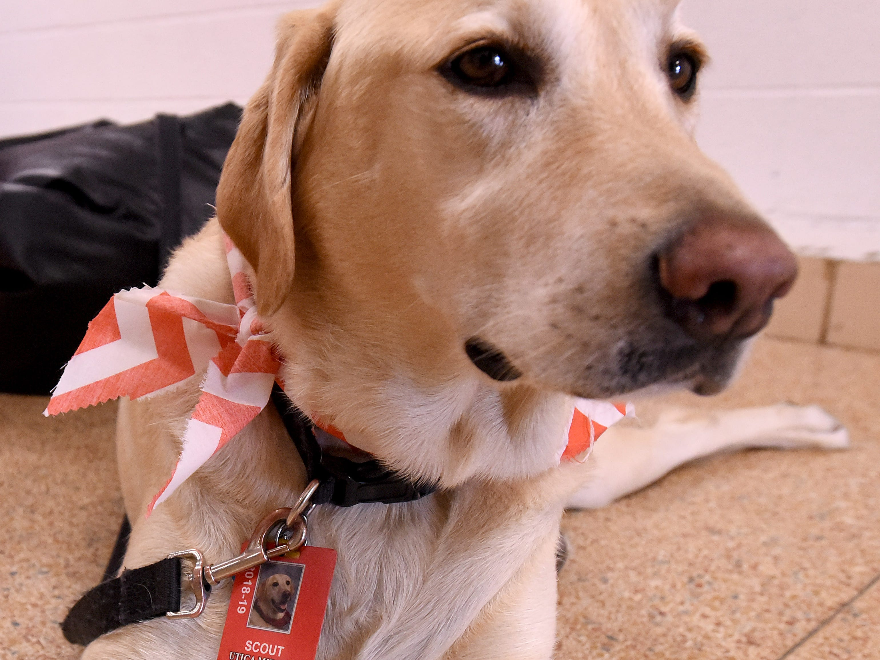 """Utica Middle School therapy dog Scout wearing a school ID badge during a signing of the book """"Scout Goes to School"""" written by Scout's owner and school language arts teacher Barb Almendinger."""