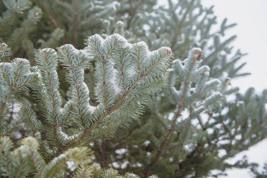 The Snow Covered Fir Tree