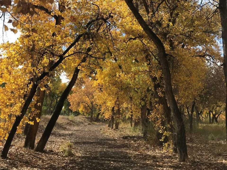 Should you fertilize as the seasons change?