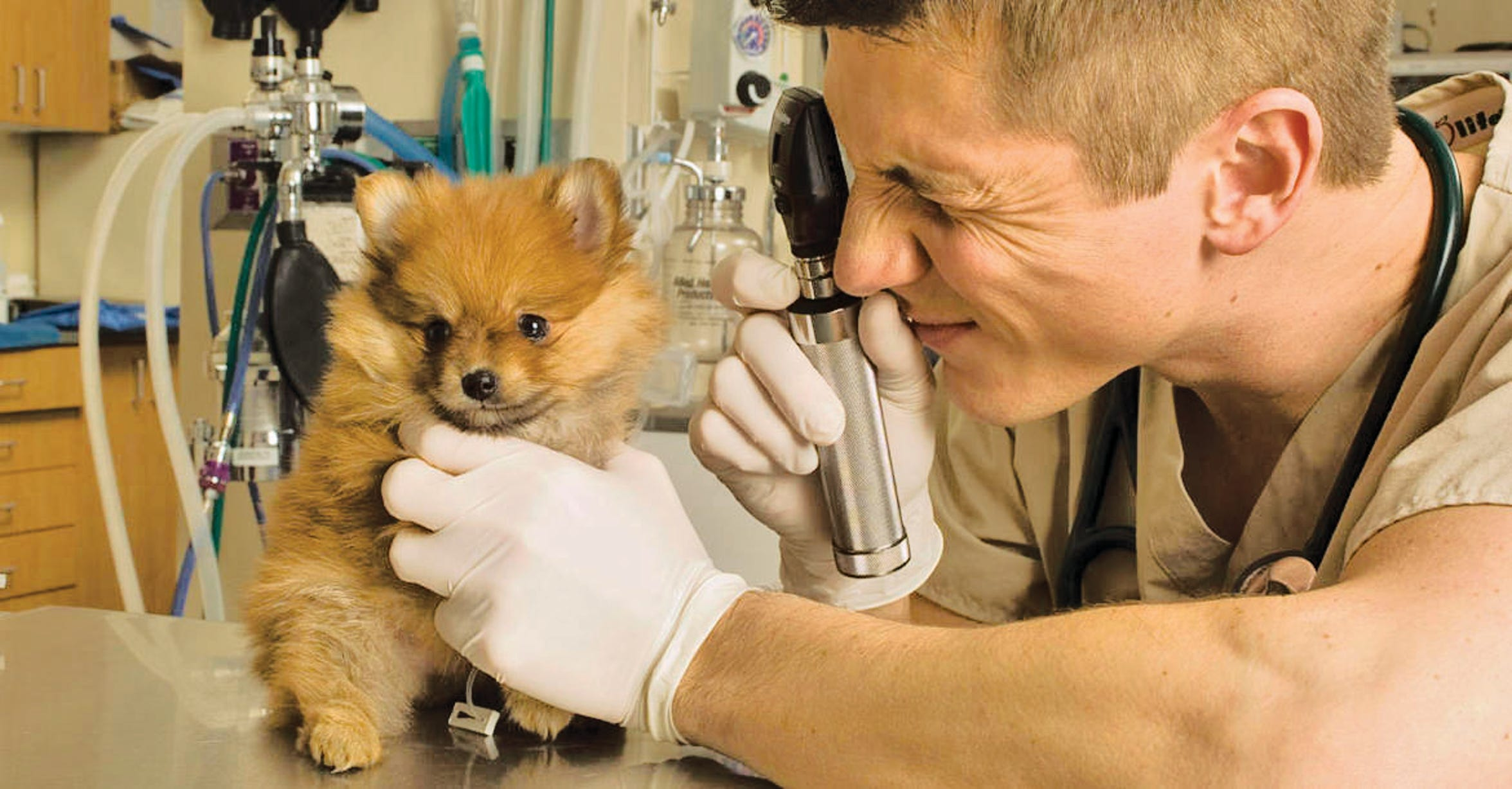 Best Veterinarian: Carter Animal Hospital