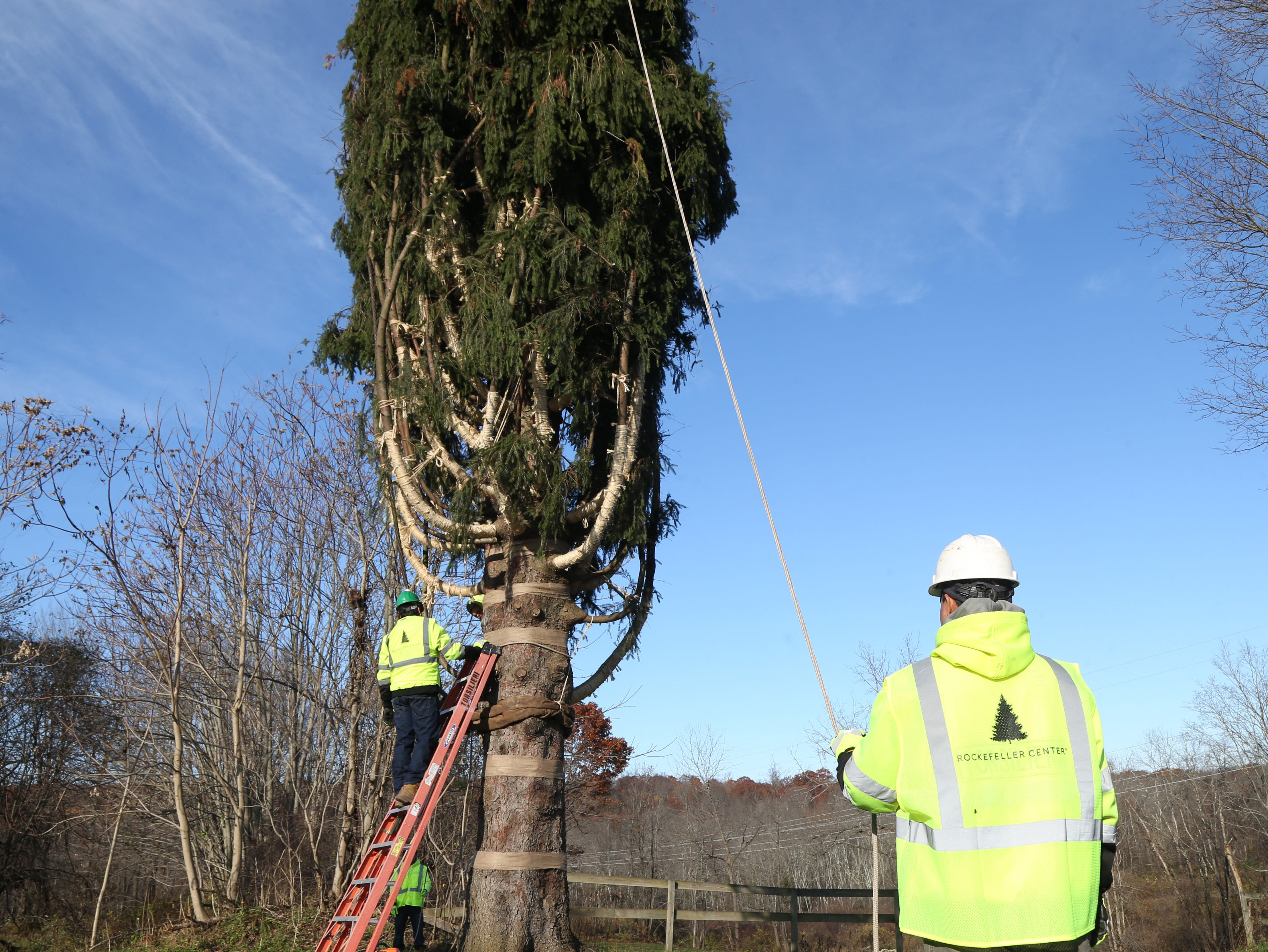 A tree crew prepares a Norway Spruce tree in Wallkill before it is cut down for the 2018 Rockefeller Center Christmas Tree on November 8, 2018.