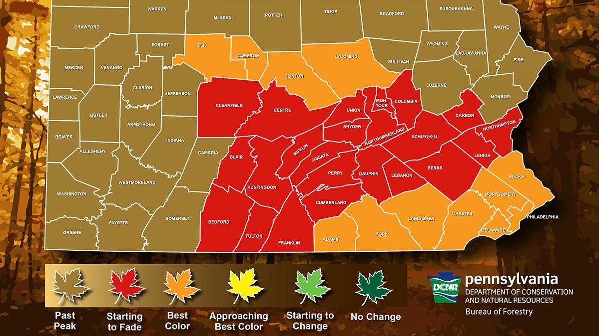 Pennsylvania fall foliage map for the week ending Nov. 14.