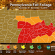 A few patches of colorful leaves remain in Pa. in final fall foliage update of season