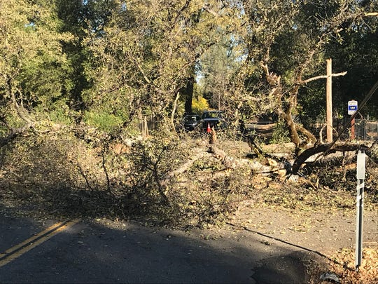 A fallen tree near Falling Leaf Road and Old Alturas Road in Bella Vista area took down telecommunications lines Thursday morning - but it's not the cause of power outage in region.