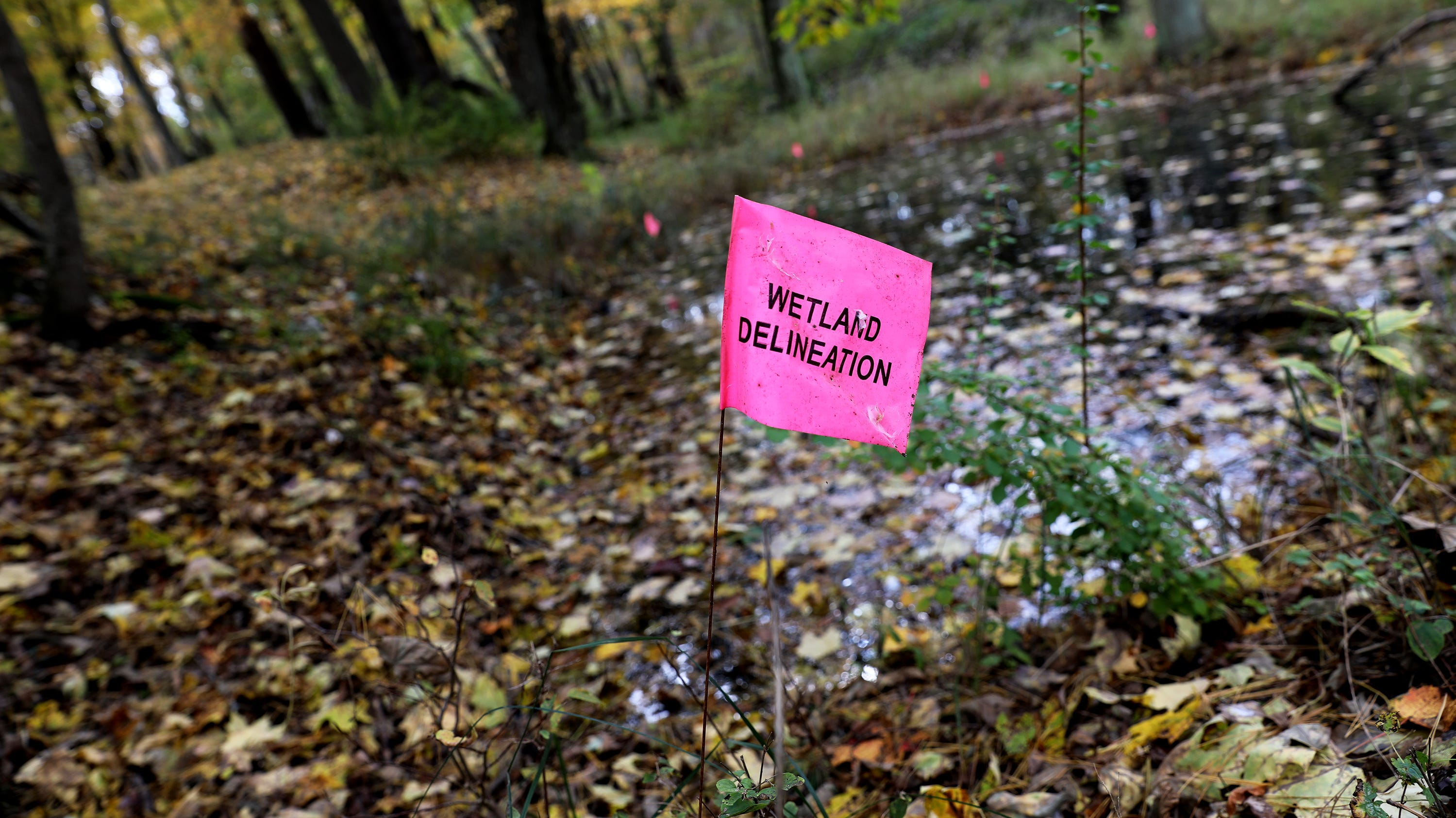 Former DNR employee: Staff pressured to OK Kohler golf course on rare Wisconsin wetlands and state park