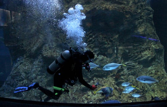Surrounded by ocean fish, an injured veteran enjoys the weightless feeling of SCUBA diving in a Wonders of Wildlife aquarium tank.