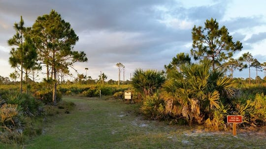 Meet at 9 a.m. at the Jensen Beach Boulevard entrance of the Savannas Preserve State Park for a two-hour walk on the trails.