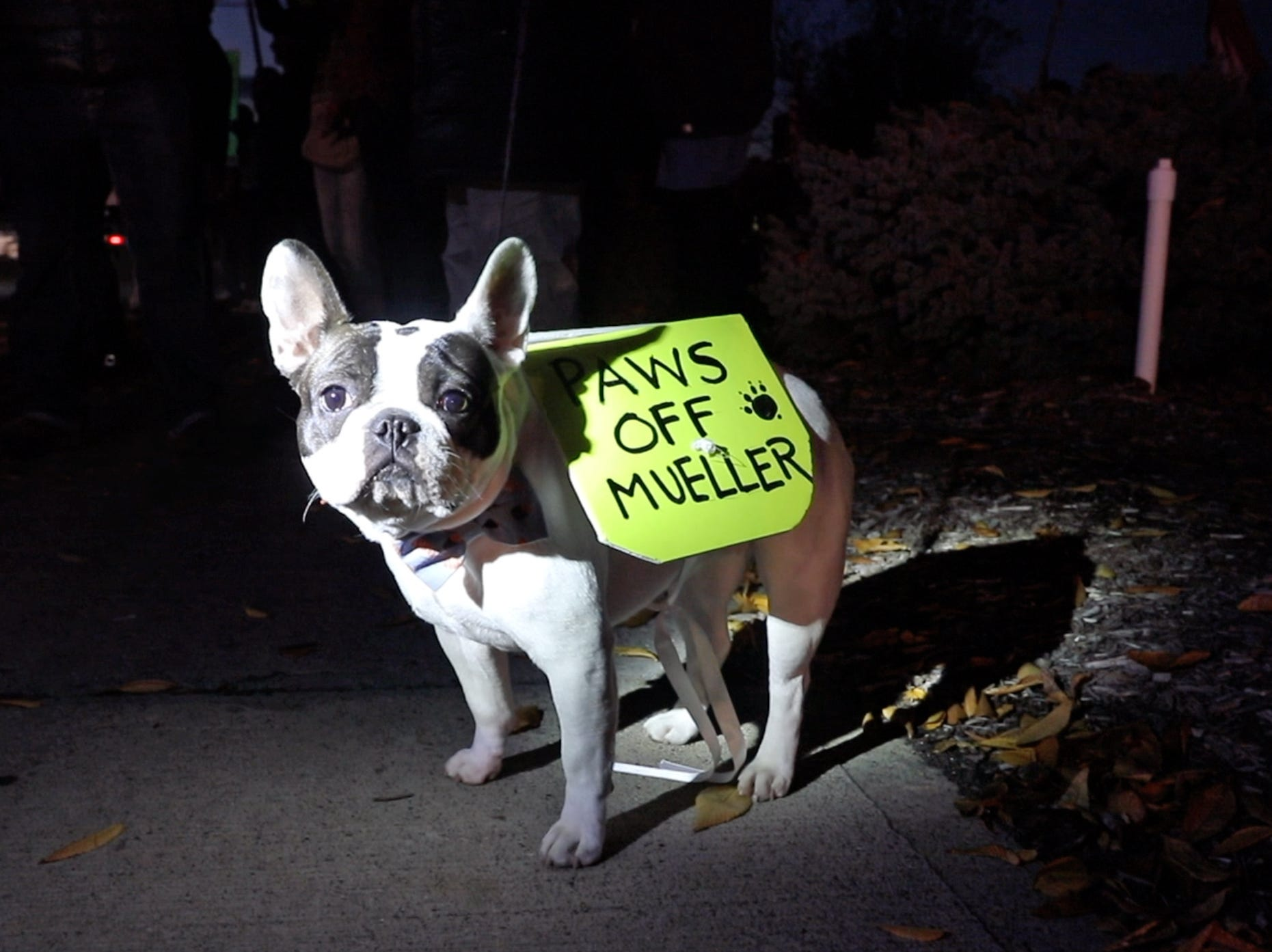 Piermont's Margret Grace's dog, Madeline, joins in protest for the protection of Robert Mueller's investigation Thursday on Route 59 in Nanuet. In the wake of U.S. Attorney General Jeff Sessions' firing on Wednesday, local residents gathered to rally for the protection of the investigation.
