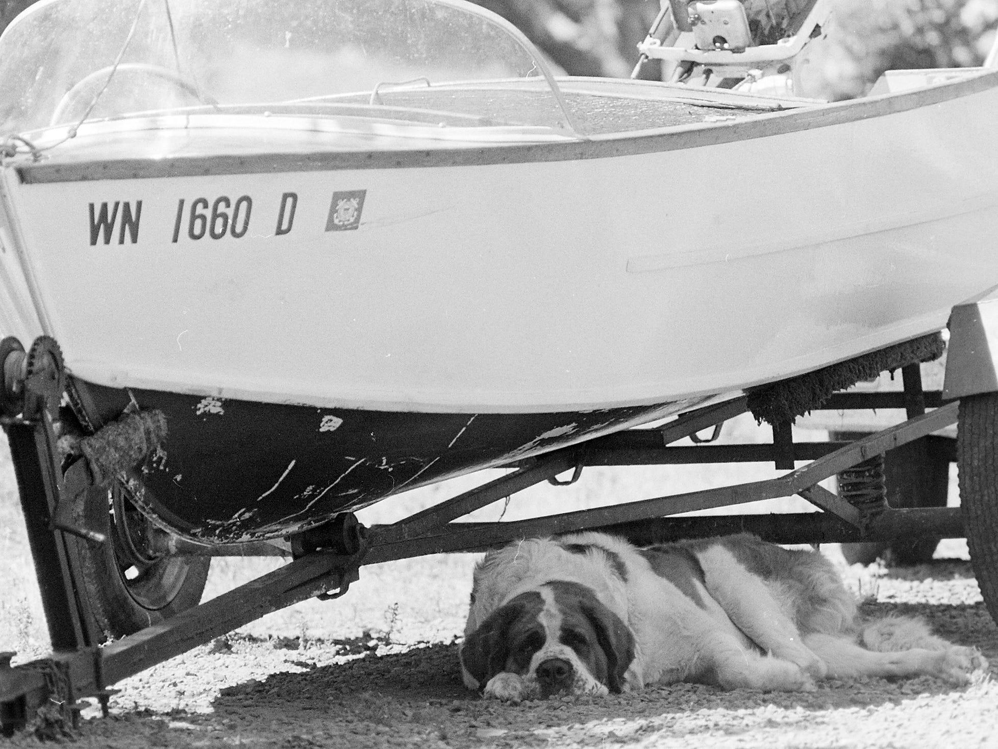 08/03/77Dog Under Boat