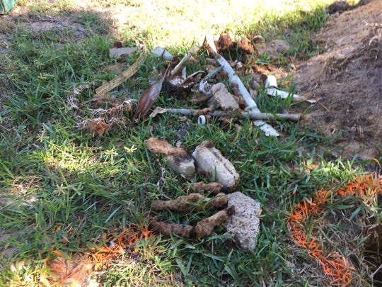 Sandra Sullivan dug up these metal items and other items she suspects are military waste in her backyard off Dorset Lane in South Patrick Shores.