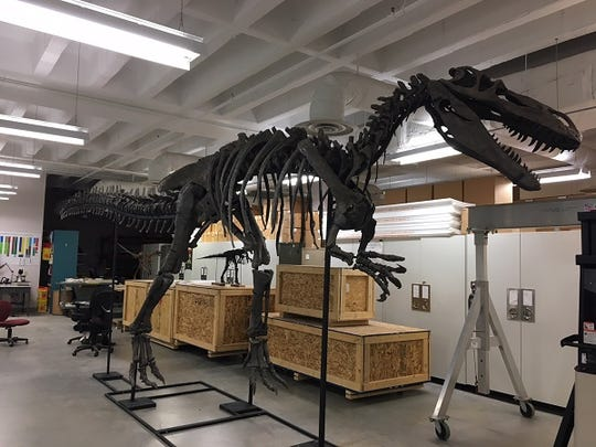 United Dairy Farmers made a donation to Cincinnati Museum Center's new Dinosaur Hall to help fund the Torvosaurus skeleton