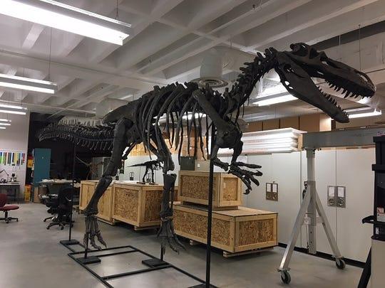 United Dairy Farmers made a donation to Cincinnati Museum Center's new Dinosaur Hall to help fund the Torvosaurus skeleton