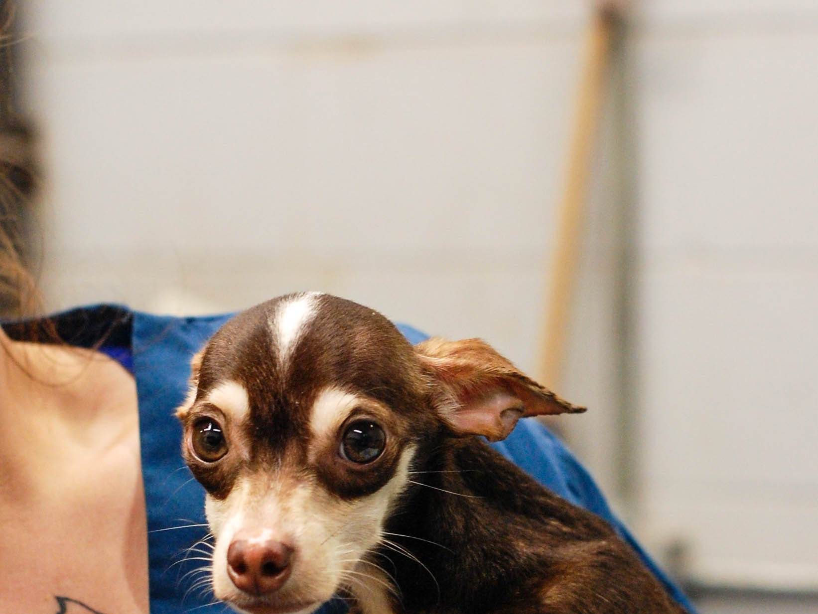 Oscar the dog was found in a Des Moines dumpster. A passerby rescued him and brought him to the Animal Rescue League of Iowa.